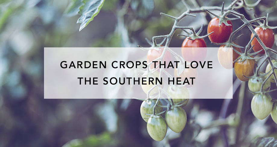 14 Garden Crops That Love the Southern Heat