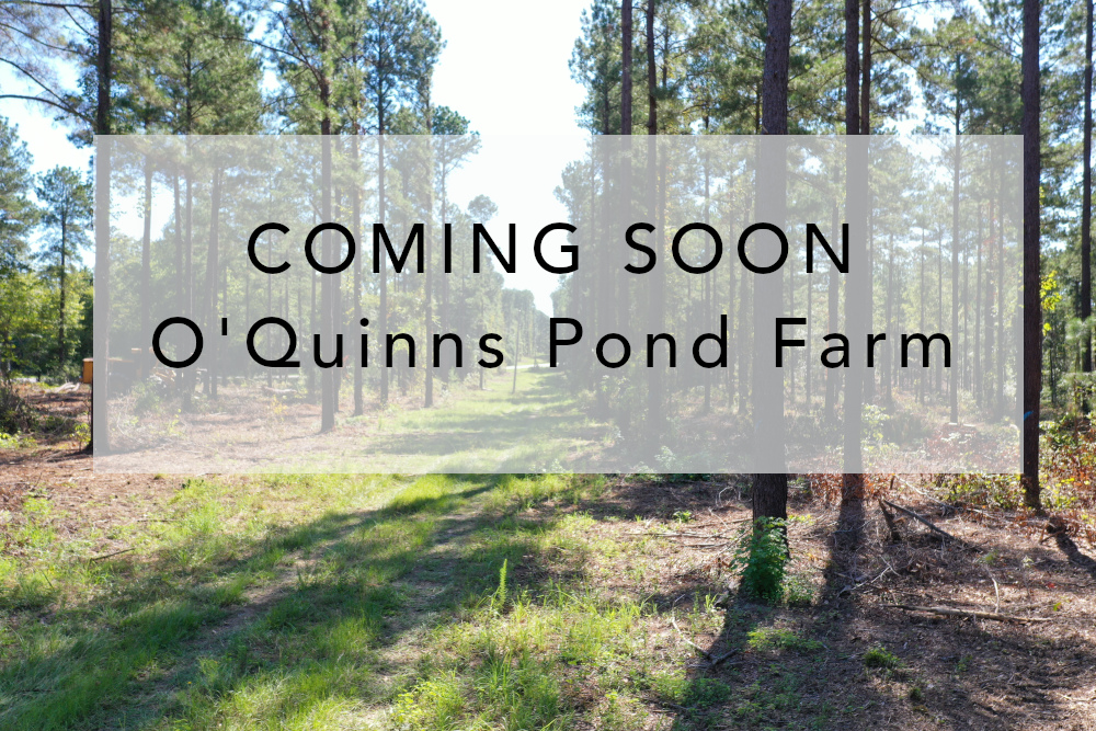 Hurdle Realty has new properties becoming available soon: O'Quinns Pond Farm
