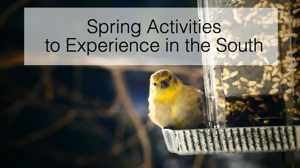 Spring Activities to Experience in the South