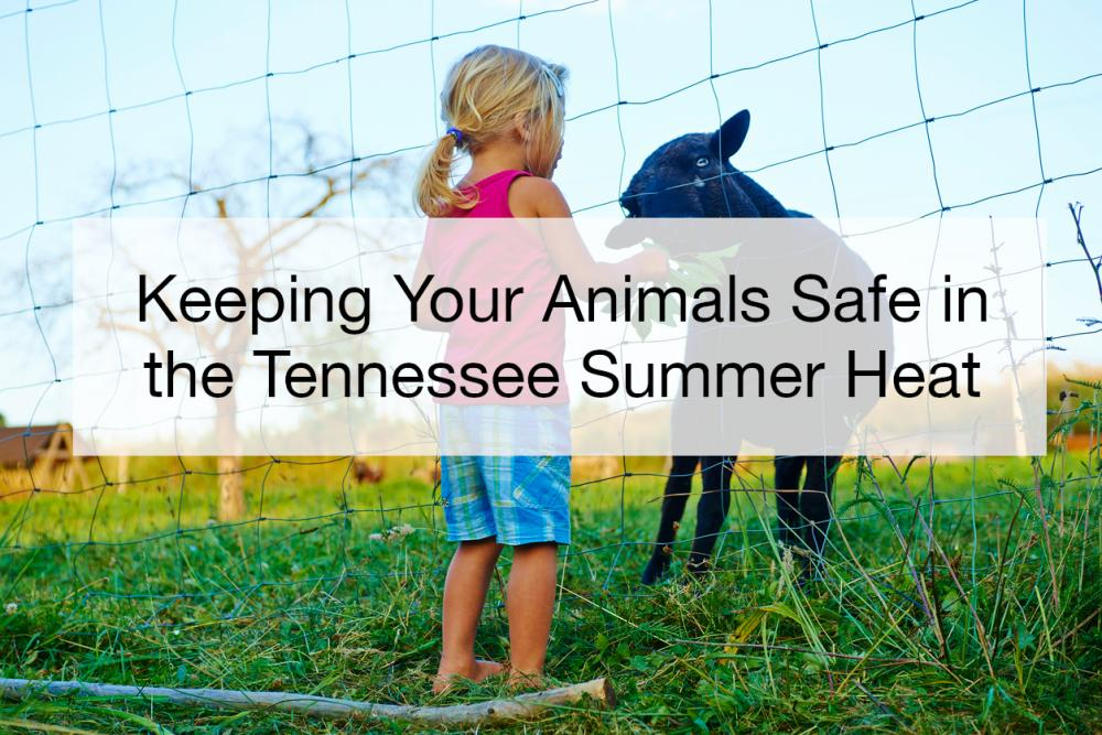 Keeping Your Animals Safe in the Tennessee Summer Heat