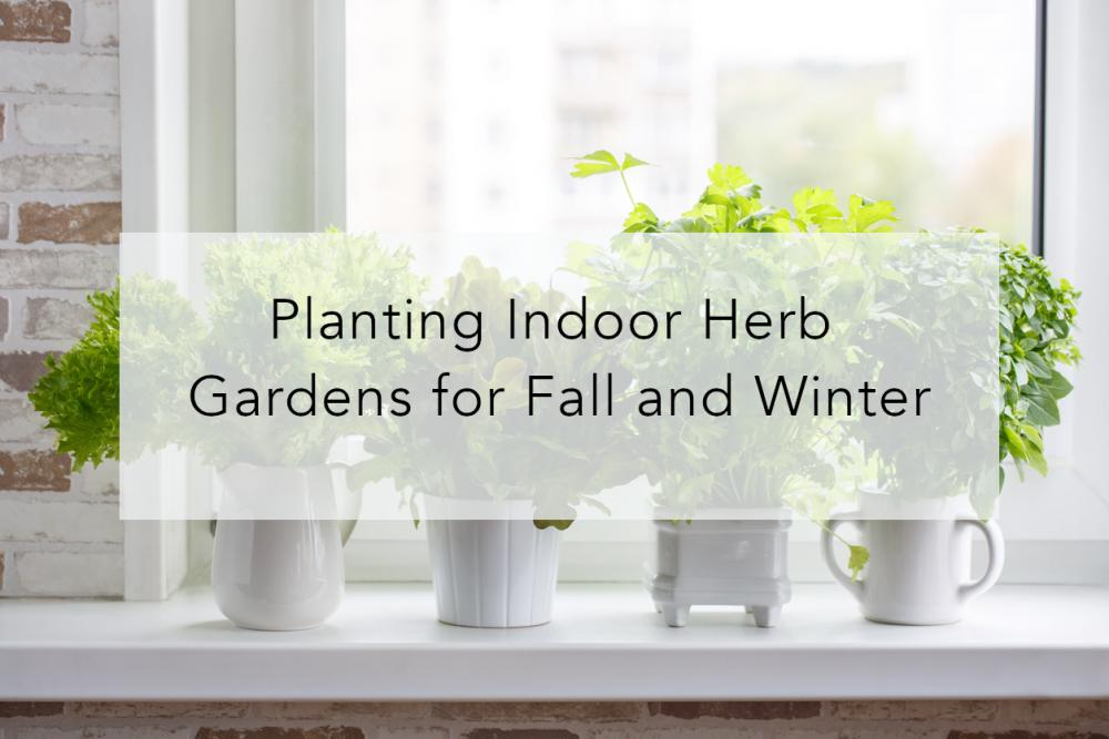 Planting Indoor Herb Gardens for Fall and Winter