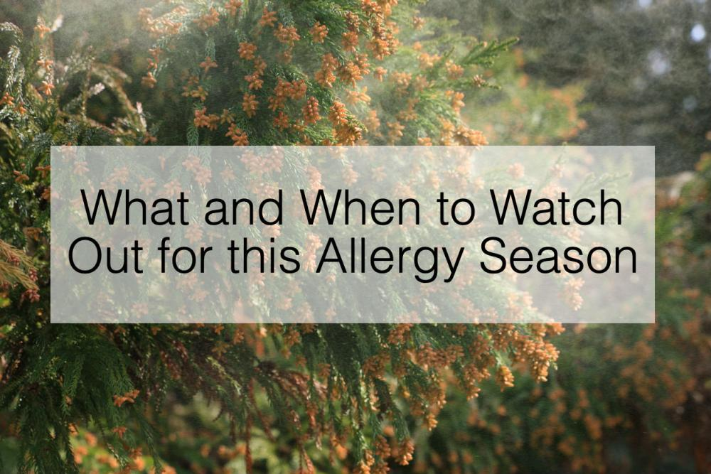 What and When to Watch Out for this Allergy Season