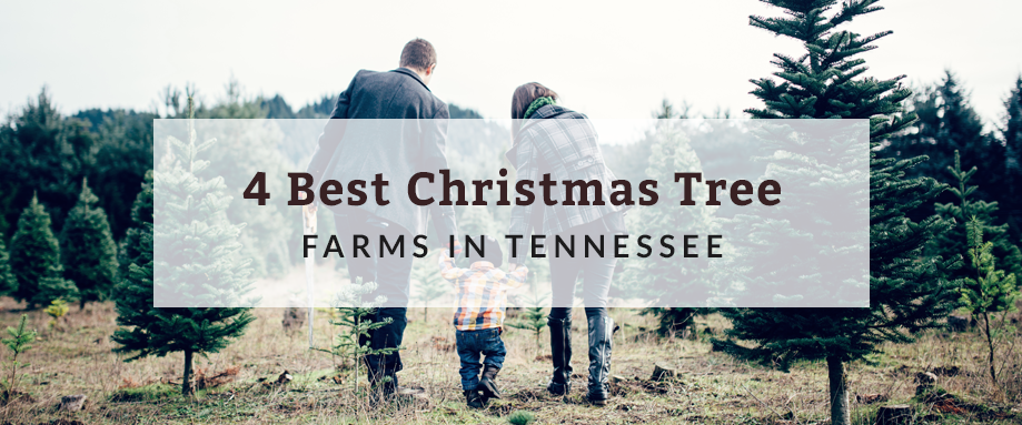 4 Best Christmas Tree Farms In Tennessee