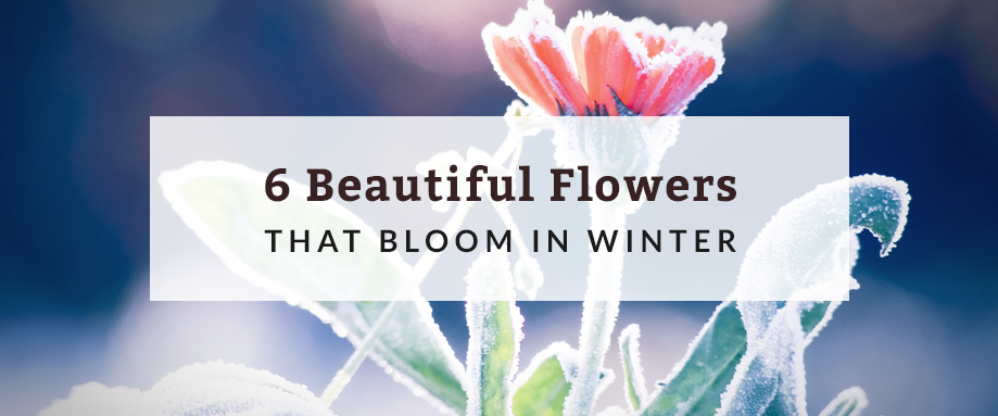 6 Beautiful Flowers That Bloom In Winter Hurdle Land And