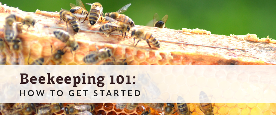 beekeeping 101 how to start a bee colony hurdle land
