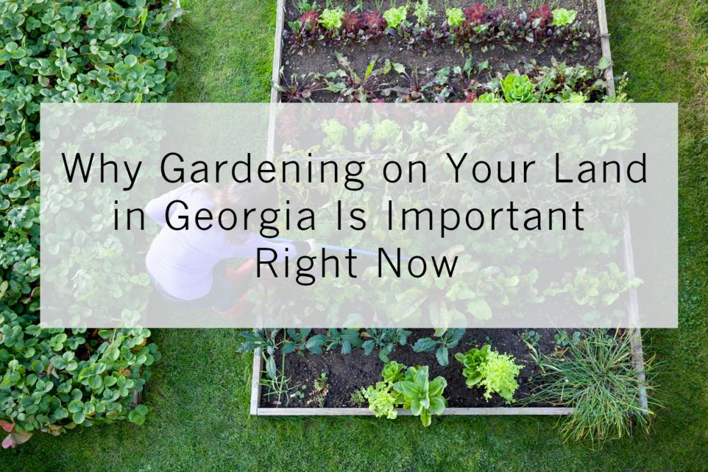 Why Gardening on Your Land in Georgia Is Important Right Now