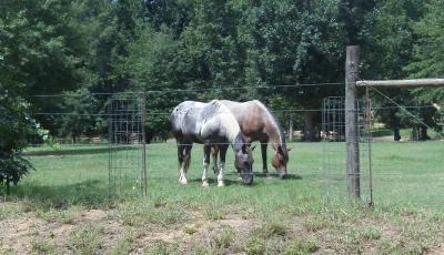 Hurdle Land For Sale In Jasper County, GA