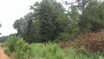 Hurdle Land for Sale in Burke County, Georgia