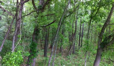Hurdle Land for Sale in Putnam County, Georgia