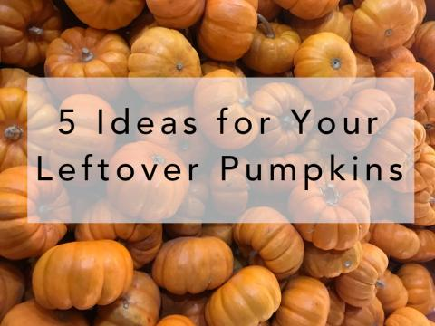 Blog title over a bed of bright orange pumpkins: 5 Ideas for Your Leftover Pumpkins