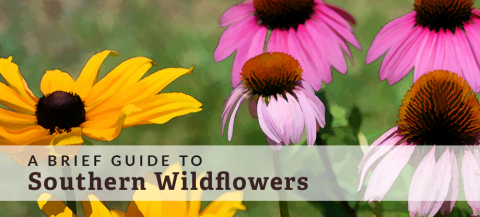 guide to southern wildflowers
