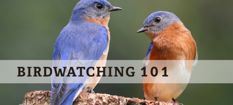 birdwatching tips