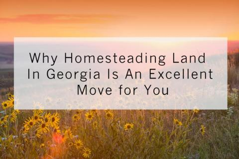 Why Homesteading Land In Georgia Is An Excellent Move for You