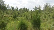 Hurdle Land for Sale in Laurens County, South Carolina