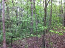 Hurdle Land for Sale in Greenville County, South Carolina