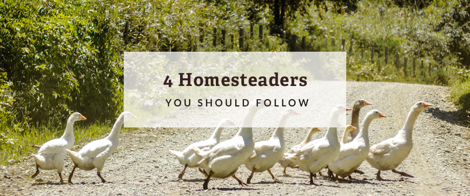 homesteaders to follow