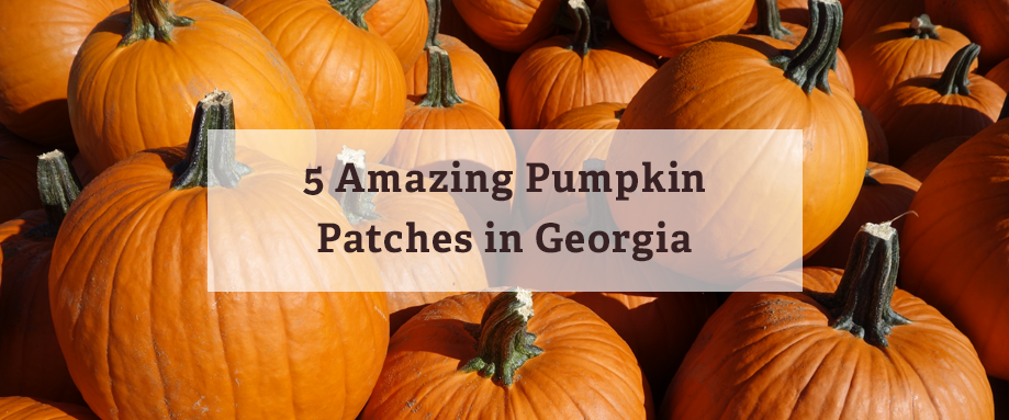 pumpkin patches georgia, rural land